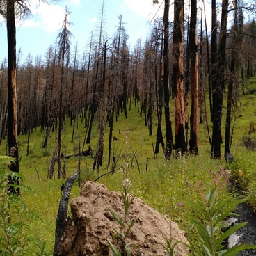 Many trees were lost in the fire.- Little Queens River - Browns Lake