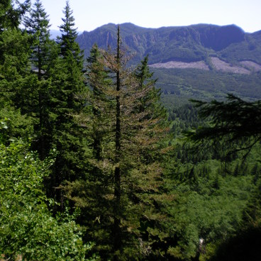 Saddle Mountain view- Saddle Mountain
