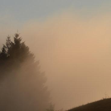 Foggy Golden Sunset- Mount Tamalpais State Park