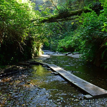 One of the many wet, wooden planks you get to cross through the creek- Fern Canyon
