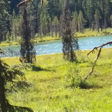 On the trail from Clackamas Lake Campground to Joe Graham Campground.  Clackamas also has some horse corrals, but Joe Graham is right on the PCT.- Joe Graham Horse Camp