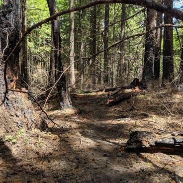 Defiance trail- Mount Defiance Hike