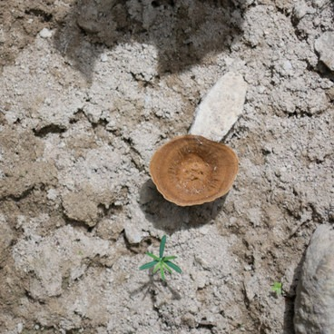 Mushroom- Muddy Fork