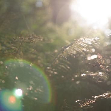 Afternoon light- Forest Park