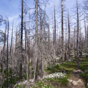Fields of avalanche lilies as far as the eye can see- Vista Ridge Trail Hike