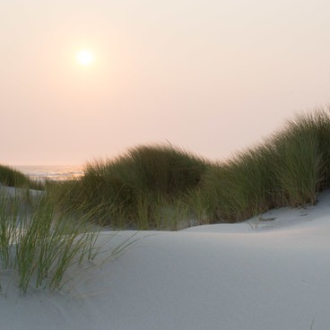 Sunset on the dunes- Bayocean Peninsula