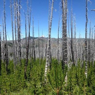 Peeking through the B&B burn to Mt Jefferson- Canyon Creek Meadows