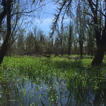 Flooded forest- Scappoose Bay