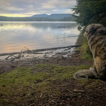 Looking out at the lake at sunrise.- Timothy Lake, Meditation Point Campsites