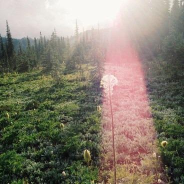 Alpine Flowers- Goat Lake via the Snowgrass Trailhead