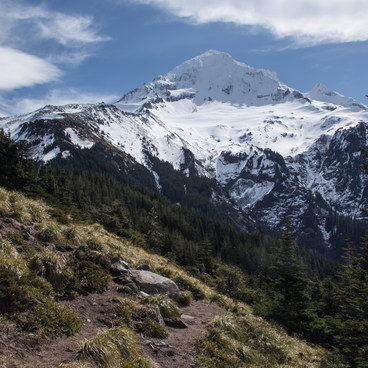 Mount Hood (11,250') from the trail. - McNeil Point