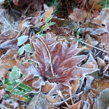 Winter leaves- Wild Cherry Trail Loop