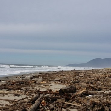 Beach covered with driftwood after winter storms- Nehalem Jetty Trail