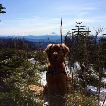 Monroe on the approach to Silver Star- Silver Star Mountain via Ed's Trail + Silver Star Trail