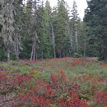 Elk Meadows