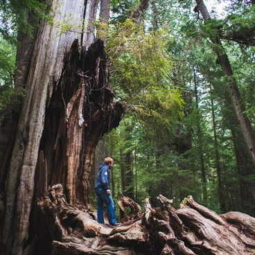 Size comparison. The whole tree doesn't even fit into the frame!- Kalaloch Big Cedar Tree + Grove