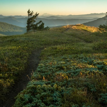 one of the summit trails leading off towards Mt Rainier- Table Mountain