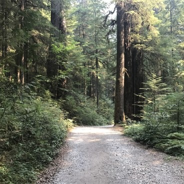The old forest road, just past the gate at the trailhead.- Opal Creek Hiking Trail