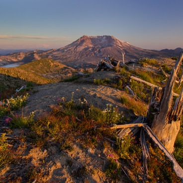 Evening light across the blast zone- Mount St. Helens National Volcanic Monument