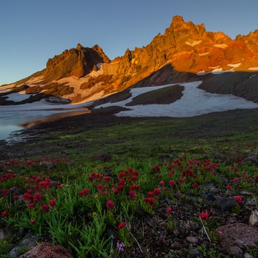 Wildflowers thrive by spring water in the lake's dry, higher bed- Broken Top Crater Hike