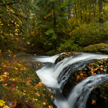The creek above the North Falls- Silver Falls, Trail of 10 Falls