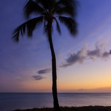 A lone palm looks on as blue hour sets in.- Tracks Beach Park