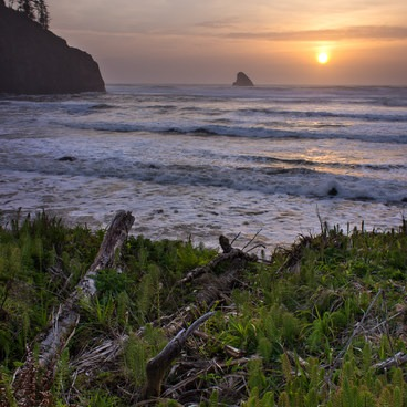Bluff meadow at sunset.- Cape Meares Big Spruce + Beach Trail