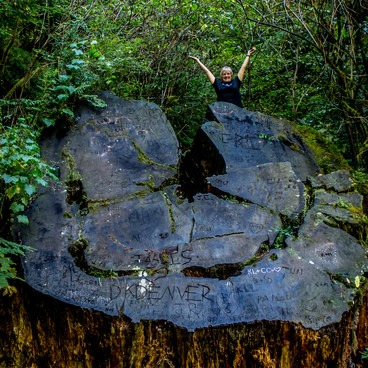 This stump along the road to Stout Grove shows just how large the oldest coast redwoods can grow!- Stout Memorial Grove