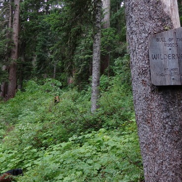 Bull of the woods- Whetstone Mountain Hike