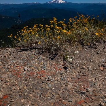Wildflowers and Mt Jefferson await you at the summit of Dome Rock- Dome Rock + Tumble Lake Hike