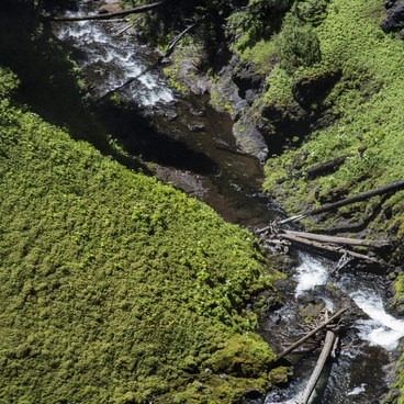 The lush gorge below the falls- Salt Creek Falls
