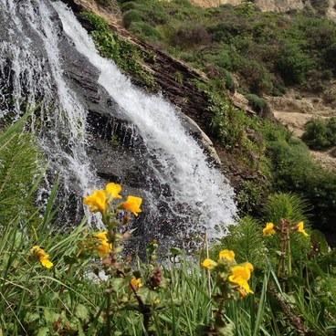 A closeup of Alamere Falls during spring- Palomarin Hike to Alamere Falls