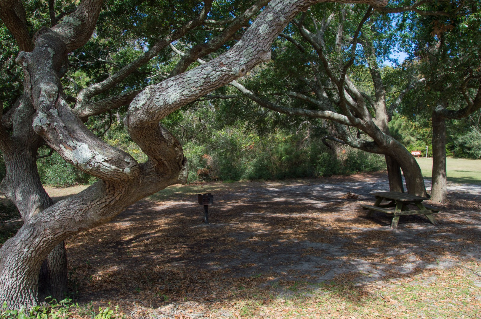 Myrtle Beach State Park Campground | Outdoor Project