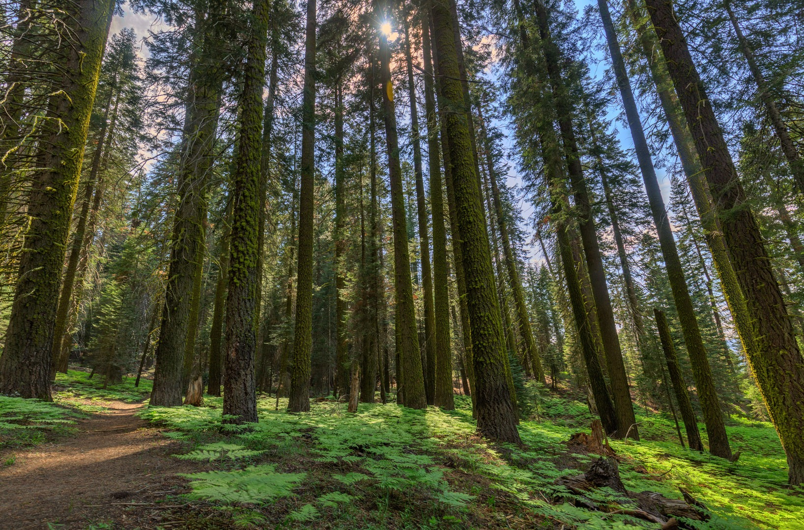 Muir Grove Trail | Outdoor Project