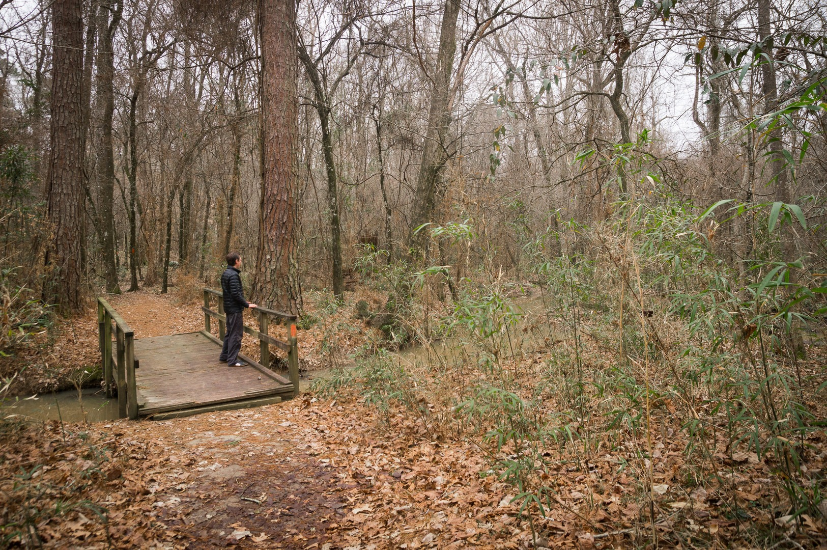 Chicot State Park Hiking Trail | Outdoor Project on