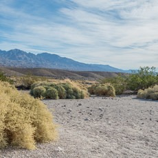Mesquite Spring Campground, California, Outdoor Project
