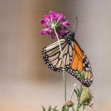 Monarch Trail, California, Outdoor Project