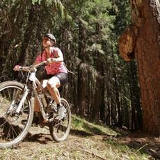 North Umpqua Trail, Lemelo Segment, Oregon, Outdoor Project