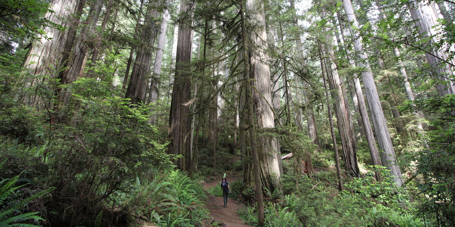 3-Day Itinerary for Redwood National + State Parks