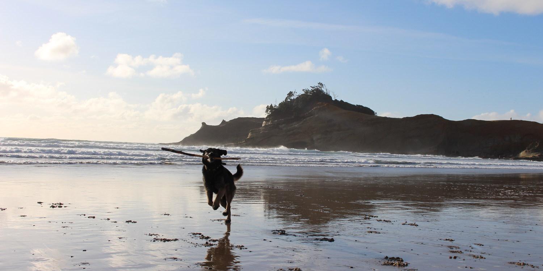 Dog Etiquette for Coastal Adventures