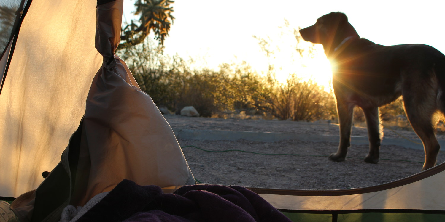 Where to Camp with Your Dog