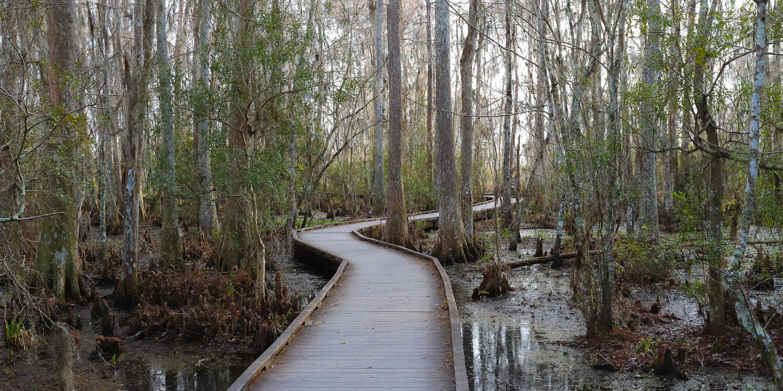 Incredible Louisiana Hiking + Biking Trails For Your Bucket List