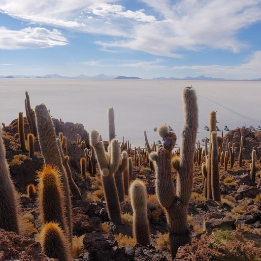 Solar de Uyuni: Incahuasi Island + Train Cemetery