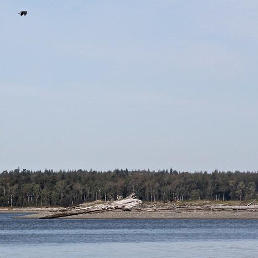 Portage Island Paddle