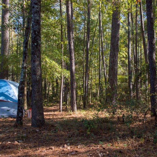 Longleaf + Bluff Campgrounds
