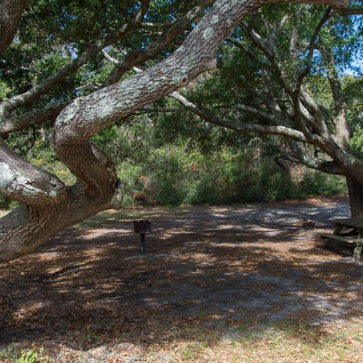 Camping At Huntington Beach State Park: Huntington Beach State Park Campground