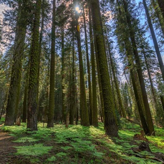 Muir Grove Trail