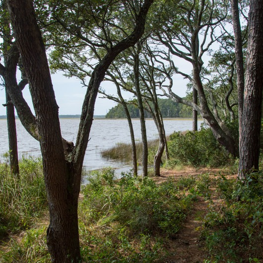 Oyster Point Campground