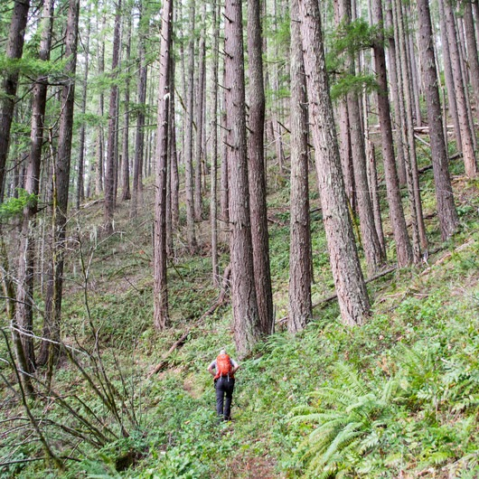 Joe's Peak Trail