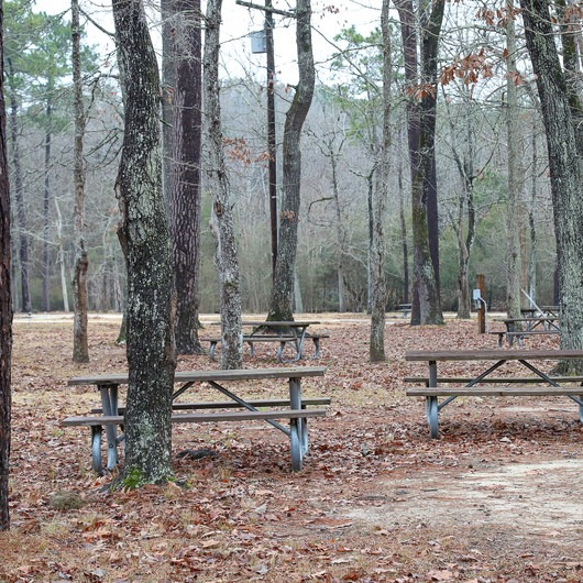 Sam Houston Jones State Park Campground